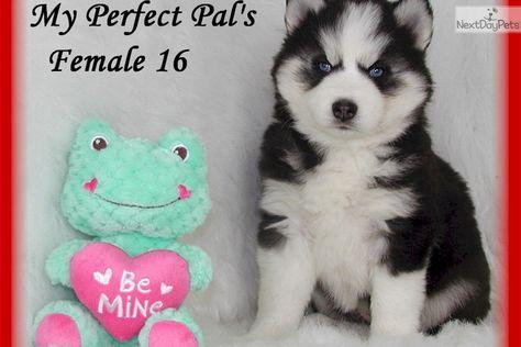 Pin On Baby Animals I Love