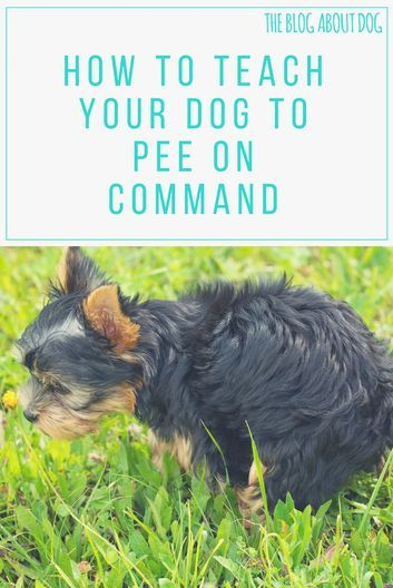 How To Teach Your Dog To Pee On Command The Blog About Dog Https