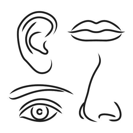 Vector Illustration Nose Ear Mouth And Eye Ear Picture Mouth Clipart Nose