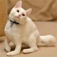 Cat Born Without Leg Bones Walks On Elbows Kitten Rescue Cats Dog Friends