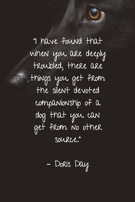 25 Dog Quotes About Love And Loyalty Dog Quotes Dog Poems Dog Quotes Love
