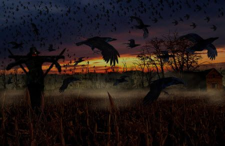 halloween spooky pictures scary crows scary halloween wallpaper bing halloween pinterest halloween spooky pictures and blog - Halloween Crows