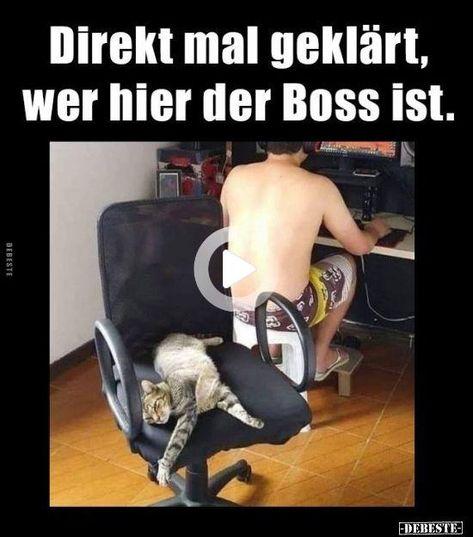 Direkt mal geklärt, wer hier der Boss ist.