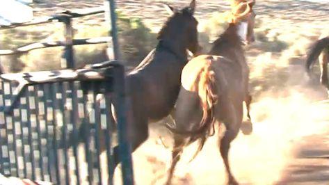 Releasing Wild Horses into the Wild