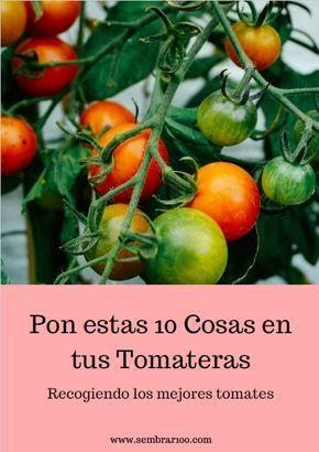 Pin De Nt En Cultivo Sembrar Tomates Plantas De Tomate Cultivar Tomates