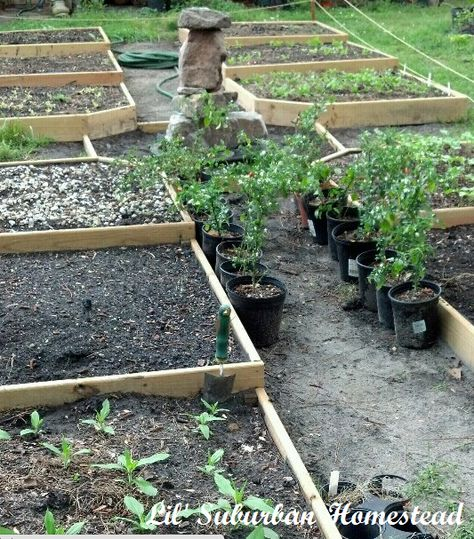 Build Your Own Raised Bed Colonial Gardens Colonial Garden Garden Layout Raised Garden