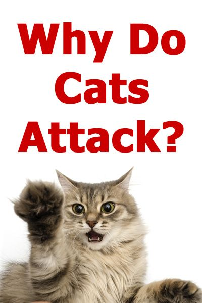 Why Do Cats Attack The Reasons For Feline Aggression Explained Article By Thecatsite Com Tcs Thecatsite Cat Cats Kitt Cat Attack Cat Behavior Cat Biting