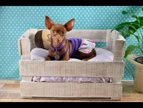 Manualidad Cómo Hacer Una Cama Para Perro Casera Y Fácil Youtube Decoraciones Para Perro Cama Para Perro Camas Para Perros
