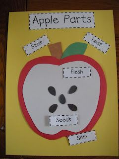 Adventures of Miss Elisabeth: Bushels of Fun with Apples! Kindergarten Science, Preschool Curriculum, Preschool Lessons, Preschool Classroom, Preschool Learning, Teaching, Kindergarten Apples, Preschool Projects, Homeschooling