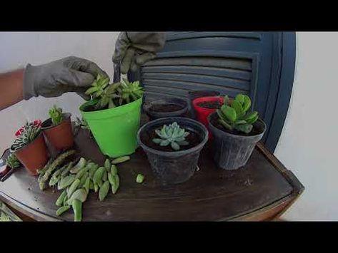 Come Fare Una Talea Di Piante Grasse Youtube Giardinaggio