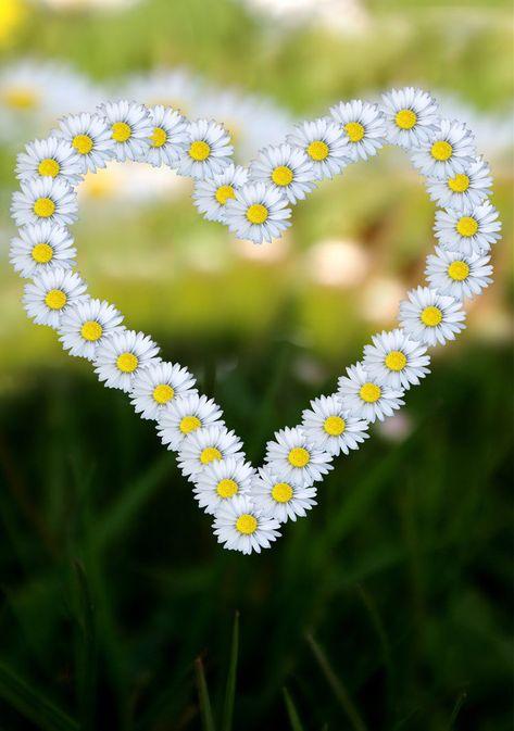 » Valentine's Day: Valentine Symbols and Valentine Week