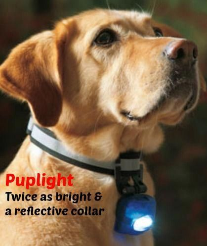 Dog Collars Harness For Large Dogs Dog Collar Zapper For Training