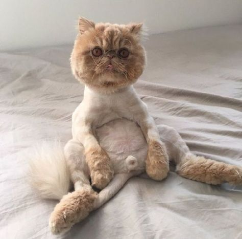 14 Hilarious Pictures of Pet Haircuts That Will Make You LOL - FunRare