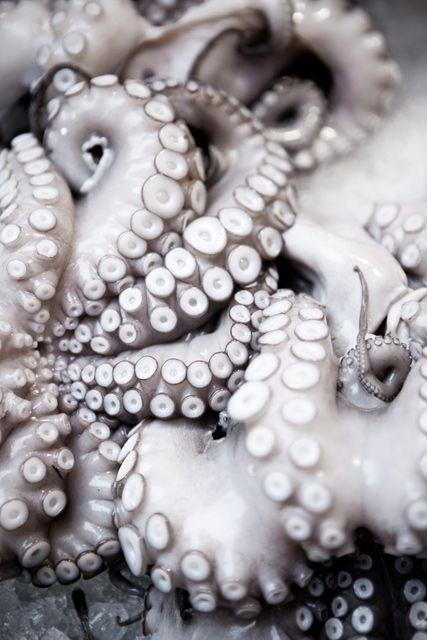 Octopus by Araceli Paz Photography//