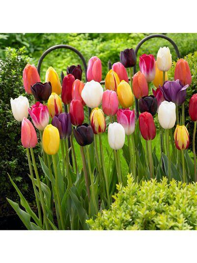 Single Late Tulip Bulb Mix Set Of 10 Gardener S Supply In 2020 Bulb Flowers Garden Bulbs Tulip Bulbs