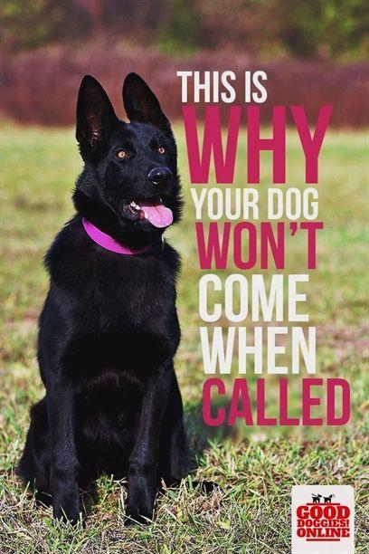 Dog Training El Paso Dog Training Whistle Ultrasonic Sound Ultra