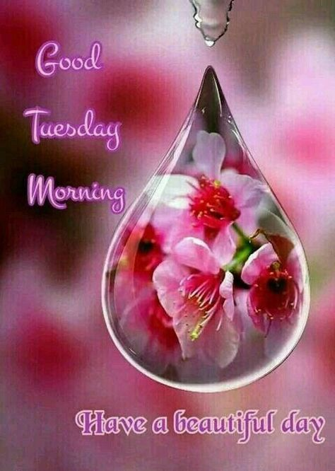 Good Tuesday Morning! Have a blessed and beautiful day.