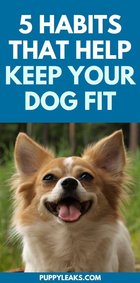 5 Everyday Habits That Help Keep Your Dog Fit Dog Training Dogs