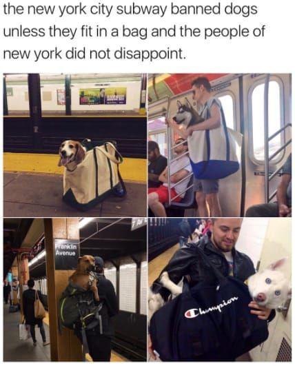 Die New Yorker U Bahn Verbot Hunde Es Sei Denn Sie Passen In Eine Tasche Und Die Menschen Von Hunde Me Hund Funnies Lustige Humor Bilder Memes Humor