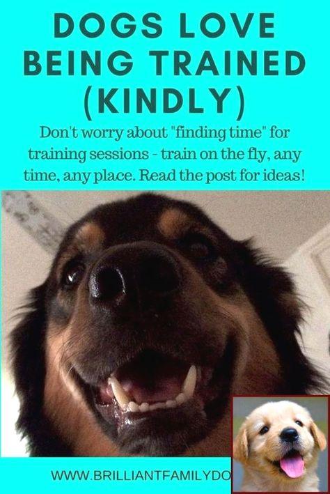 Dog Behavior Backing Into You And Dog Training Courses Tafe Dog