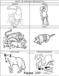 Resultado De Imagem Para Animais Da Caatinga Para Pintar