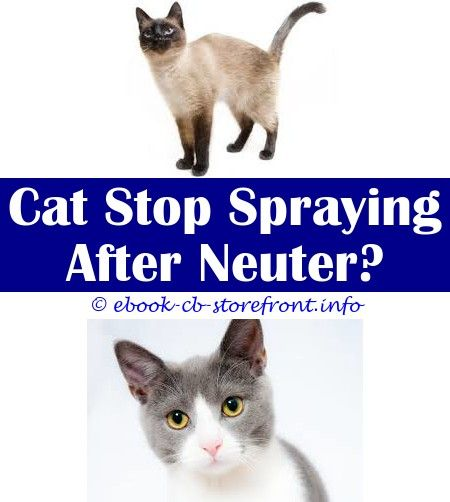 12 Enthralling Stop Cat Spraying In House