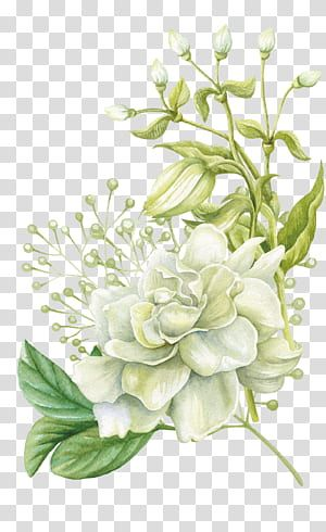 Watercolor Painting Floral Design Flower Hand Painted Watercolor Flowers White Rose Flower Painti Floral Painting Free Watercolor Flowers Flower Illustration