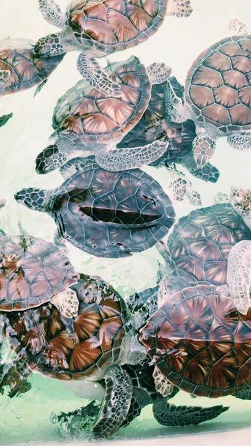 Vsco Erinanneee Cute Turtles Cute Little Animals Turtle Painting