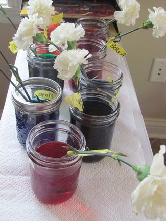Carnation colors-- this is a great activity for preschool to show students how flowers soak up water through their roots, how it goes up the stem, and out into the leaves and petals. This is an experiment that the kids could perform on their own and make observations each day about the changes they notice.