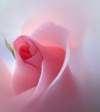 Luz Maria No Md Sur Twitter Asilascosas Https T Co 5ya29lvjak Twitter Flowers Neals Yard Remedies Beautiful Flowers