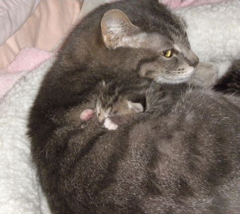 Help Feed Vet Mom Cat And Kittens Feral Cat Rescue Donation Rec