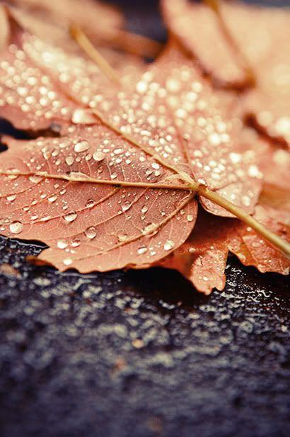 | Fall Into Autumn | {An Autumnal Serenade}