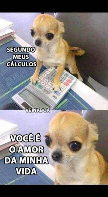 New Memes Em Portugues Engracados Kpop Ideas Couple Memes Best Memes Animal Jokes