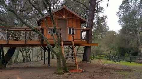Treehouses You Need to Stay In