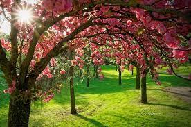 Resultat De Recherche D Images Pour Photo De Profil Nature Beautiful Flowers Pictures Nature Tree