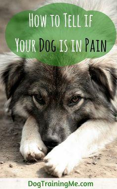 Pin On Koiran Ruokinta Ja Terveys