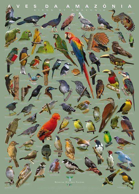 Bird Animals Amazon Amazonia Brasil Brazil By Saburns Pet Birds Bird Pictures Bird Illustration