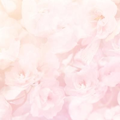 Light Pink Flower Backdrop For Baby Photography Light Pink Flowers Flower Backdrop Pink Backdrop