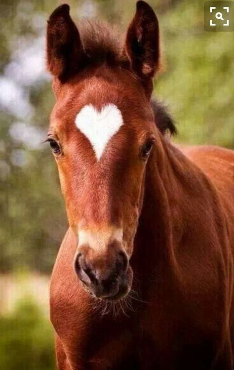 Horse with heart-shaped star🐴❤️⭐️ - #animallover #Heartshaped #horse #Star
