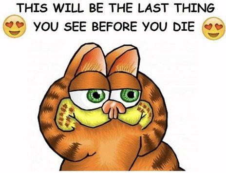 Pin By Wafflefry On Garfield Memes Me Too Meme My Love Let That Sink In