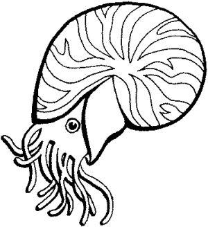Muschel Nautilus Ausmalbild Malvorlage Tiere Malvorlagen