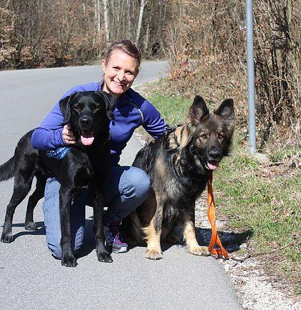 Lucky Dogs Daycare Zurich Hundebetreuung Zurich Dog Daycare