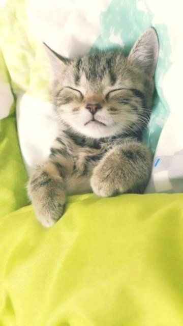 The 100 Most Cute Cat Pictures Of All Time In The World K J In 2020 Kittens Cutest Baby Cats Cute Cats