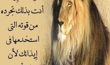 حكم عن الصور صور صور مع حكم وامثال أكتب اسمك على الصور Arabic Quotes Animals