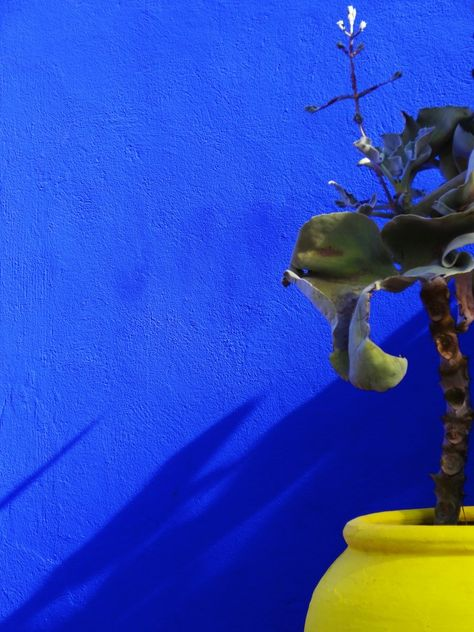 Histoire D Une Couleur Bleu Majorelle Peinture Mur De