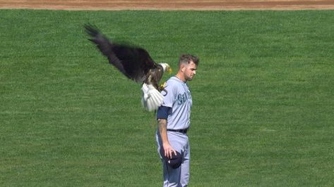 """I love that @James_Paxton fans are sporting bald eagle masks when"
