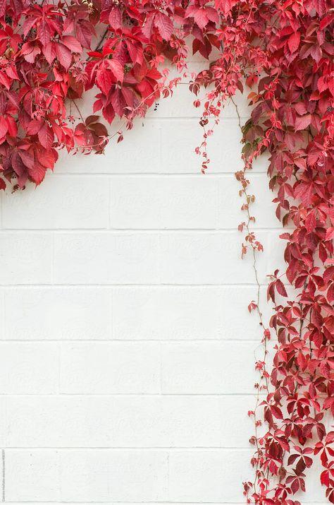 Vines On A White Concrete Wall Make A Frame | Stocksy United