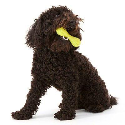 West Paw Design Zogoflex Hurley Kodben 3 Storrelser Dog Toys