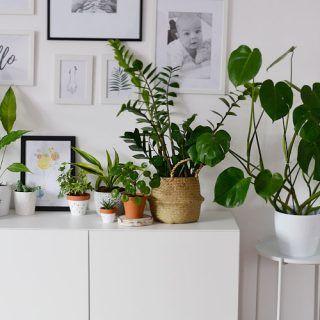 Rosliny Doniczkowe Moja Miejska Dzungla Small Apartment Kitchen Decor Beautiful Home Gardens Small Apartment Kitchen