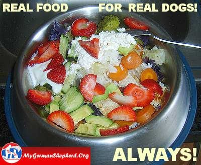 Does Feeding Your Dog Human Food Take Years Off Of Their Life